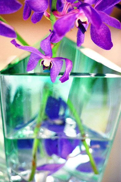 Abstract Photo, Purple Orchid from Life Forms series by MGPicascio